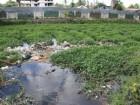 Kankung Solid Wastel2 140x105 Government allocates 1.500.000 USD to Díli Sanitation & Drainage Masterplan