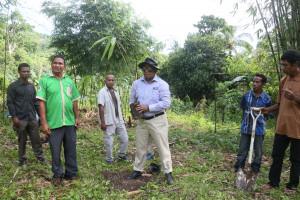 plantacao bambu