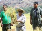 Governo em Laleia para colheita simbólica de sementes de arroz